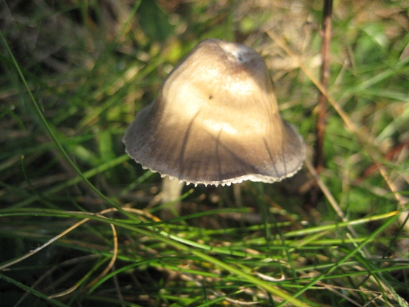 Fungi On Troopers Hill